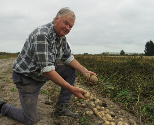 John Withell works in his boutique planting operation on the outskirts of Ashburton. PHOTOS: TONI...