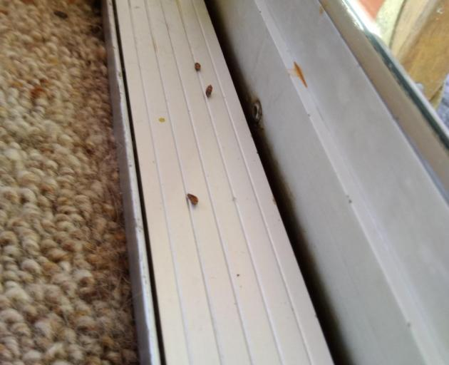 Rat droppings left on the window of Janice Walsh's Caversham home. PHOTO: JANICE WALSH