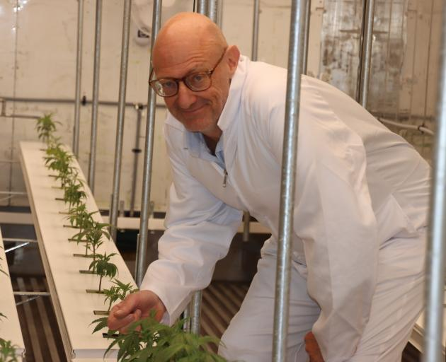 Southern Medicinal managing director Greg Marshall checks out the young hemp plants being grown...