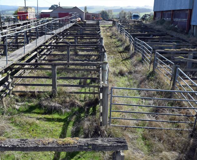The cattle yards at Heriot saleyards.