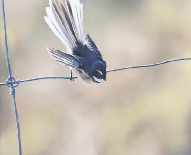 Bird on a Wire, by Tessa Barringer