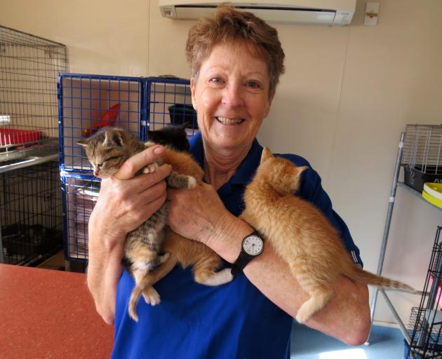 Enjoying a cuddle with four of the kittens is Mid Canterbury Animal Welfare Centre volunteer Lee...
