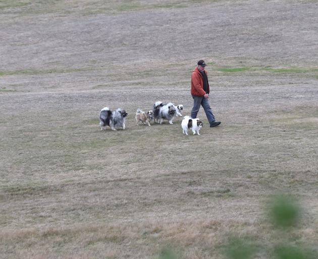 Jeff Parker, of Dunedin, walks his four dogs and one for a friend across a dry Chisholm Park...