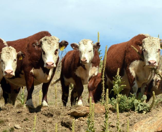 About 50% of New Zealand's meat was freighted to China this year. PHOTO: ODT FILES