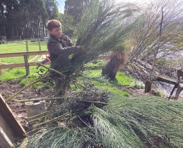 Benson Boys collects broom to hide his hunting place at the family's new duck pond on their farm...