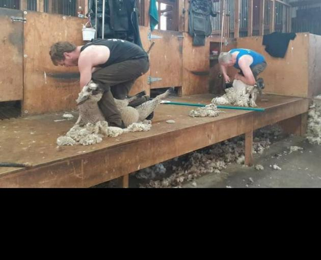 Kelvin Webster (right) and his son James work together in the shearing shed. PHOTO: SUPPLIED BY...