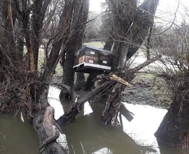 Part of a beehive lies wedged in a tree in Okuku, after being washed over deer fences by flood...