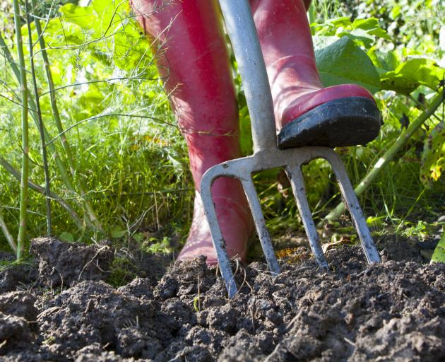 Every opportunity should be taken over the next few weeks to dig and manure the vegetable garden....