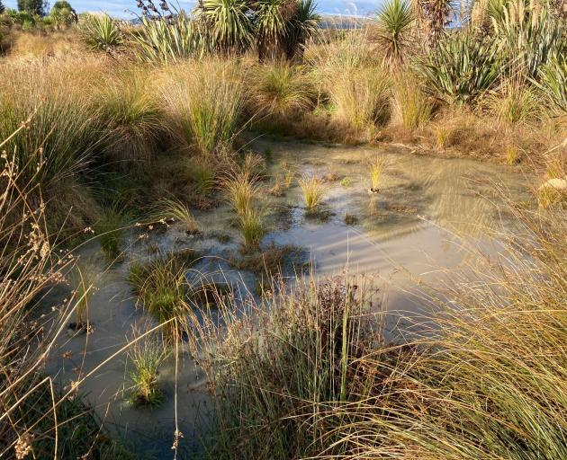 Planting at the Sinclair Wetlands. PHOTO: MARY-JO TOHILL