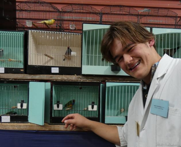 Birds on the brain . . . Jaydean Washington (16), of Waldronville, shows some of his caged birds...