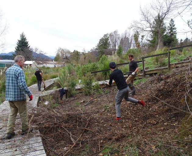 Lifting and clearing bush at Wanaka's Bullock Creek Hatchery Springs yesterday are (from left)...