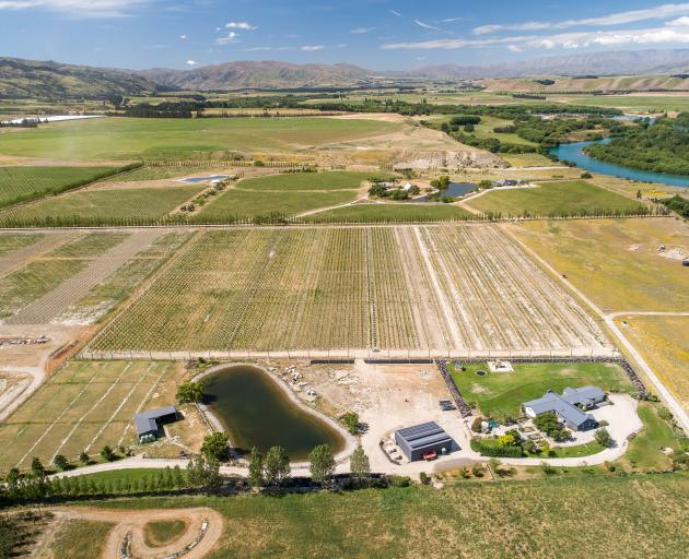 An aerial view of Forest Lodge Orchard at Mt Pisa in Central Otago. PHOTO: SIMON DARBY