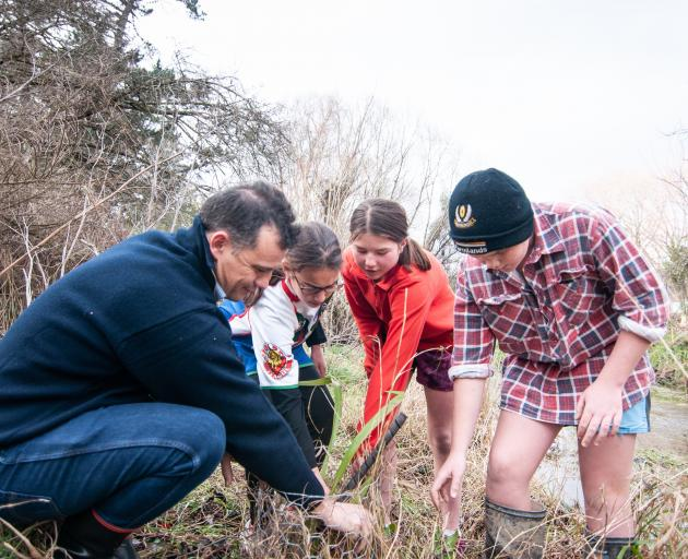 Southland MP Joseph Mooney clears weeds from native plantings with Millers Flat Primary School...