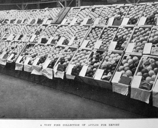 Apples for export. — Otago Witness, 7.6.1921