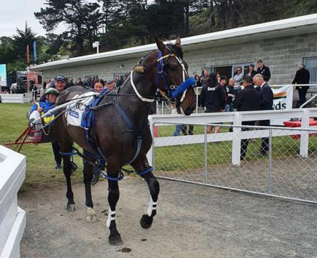 William Wallace racing at Kaikoura in November 2020. Photo: Harness Racing NZ