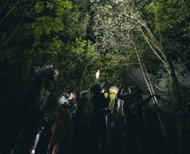 Volunteers from Whakatane Kiwi Trust run night walks in the forest surrounding Whakatane.
