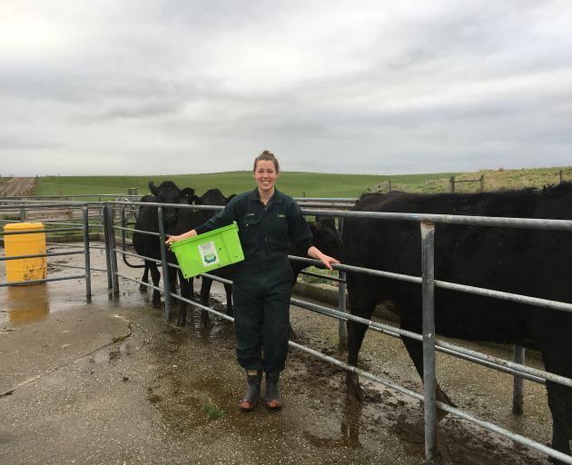 Laura Gardyne blood-tests cattle at Riversdale. . PHOTOS: VALU MAKA