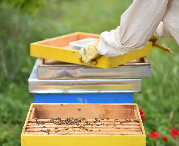 Bees are essential to our economy, food production and wellbeing. PHOTO: GETTY IMAGES