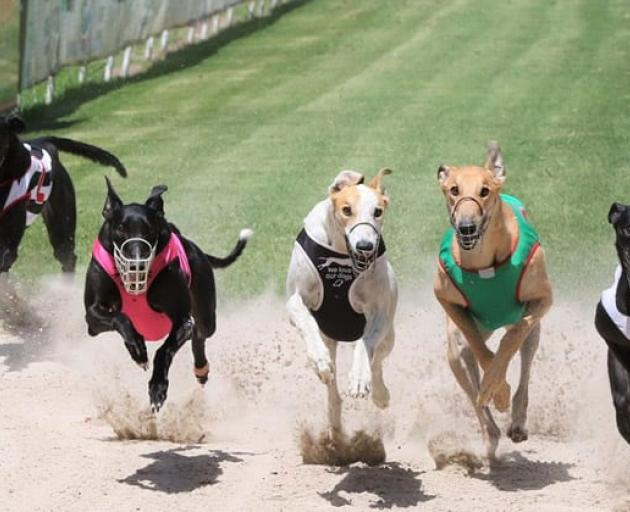 The Coastal-Burwood Community Board has voted against building a greyhound track at QEII Park....