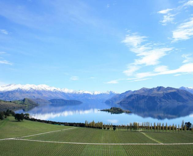 The Central Otago vineyard on the lake's shores. Photo: Briar Hardy-Hesson