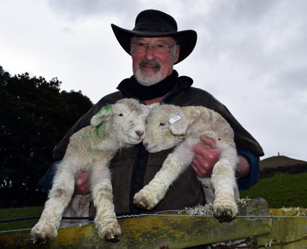 Aurora Romney stud master David Robertson checks his Romney lambs on his farm in Palmerston....