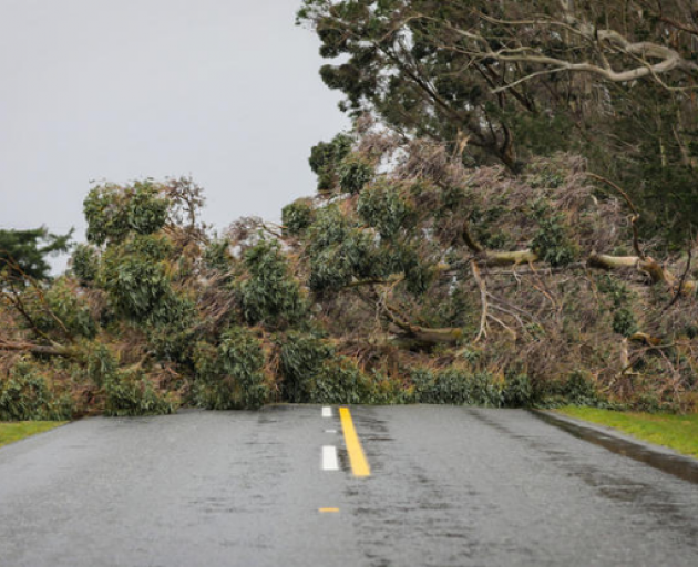 Strong winds in the Glentui area of Canterbury brought down trees on Friday. Photo: RNZ