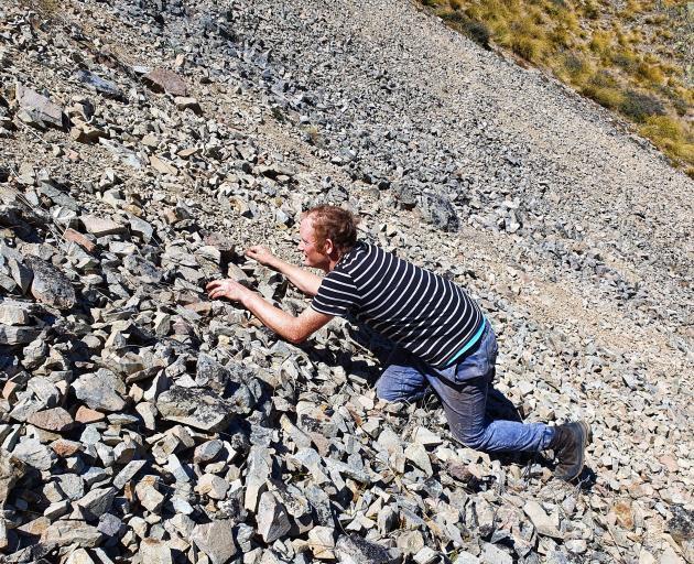 Carey Knox stalks an alpine rock skink in Oteake Conservation Park.  PHOTO: JO MONKS