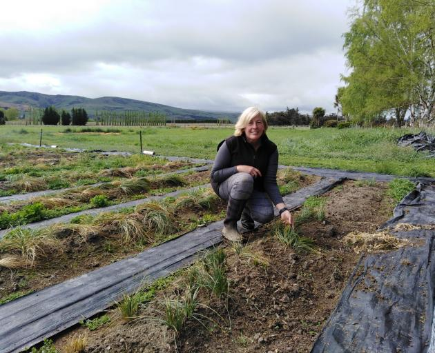Wendy King in her saffron paddock. PHOTO: REBECCA FOX