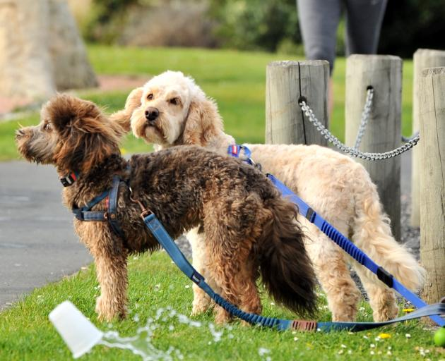 Rufus and Benson watch runners at the Molars drink station.