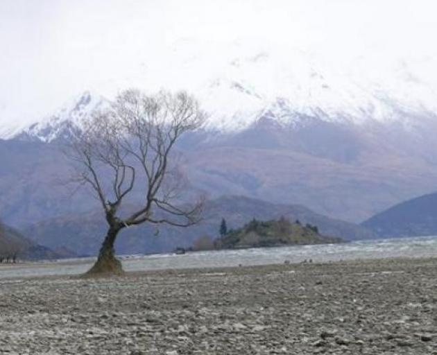 The algae has been identified in Lake Wanaka, Lake Hawea and Lake Wakatipu and other lakes in...