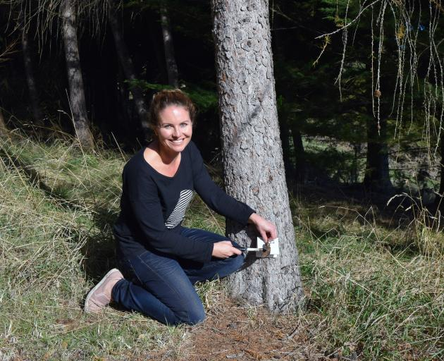 Chain Hills Community Trapping Project founder Rebecca Guest nails a chew card to a tree on her...