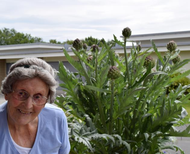 Peg Mathieson, of Mosgiel, and her artichoke plant. PHOTOS: SHAWN MCAVINUE