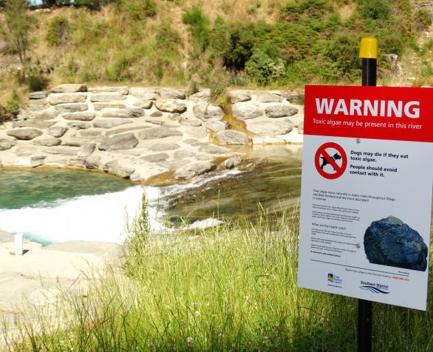 Signs warn of the toxic alga phormidium at the Hawea River whitewater park upstream of the...