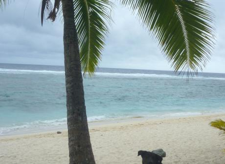 A dog relaxes on the beach in the Cook Islands. Photo: Lisa Scott.