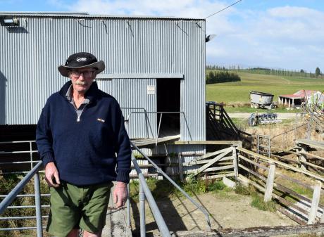 West Otago farmer Graham Walker walks on a rail at Heriot saleyards. PHOTOS: SHAWN MCAVINUE