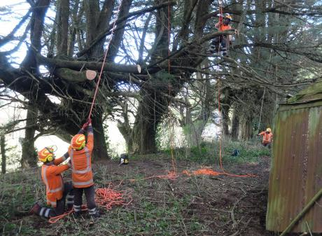 Delta arborists work on Riddell's farm building site on Arbor Day. PHOTOS: PETER PETCHEY