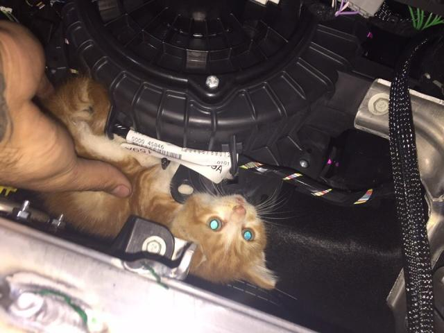 The kitten was found curled around a heating fan.