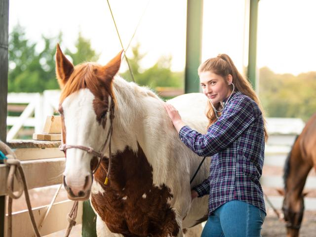 Enrolments open for Equine Certificate semester 2 intake, starts Aug.