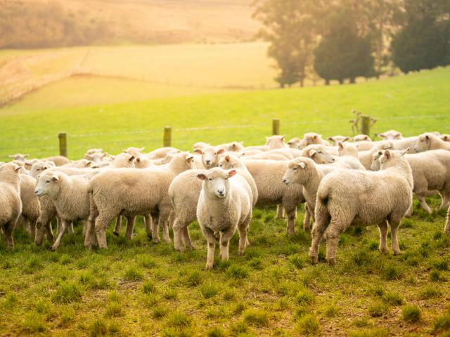 The Telford campus extends over 921 hectares of farmland and includes working sheep, beef, deer,...