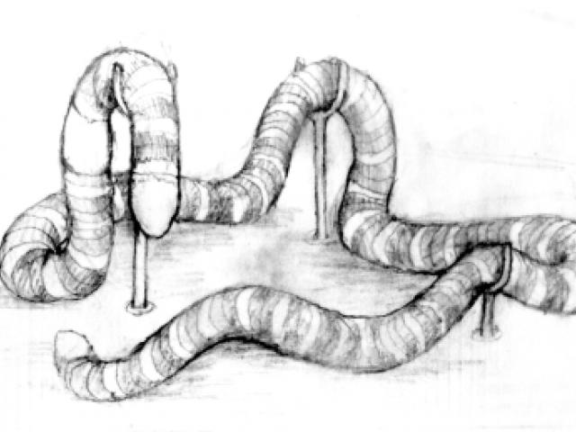 A concept drawing of the worm