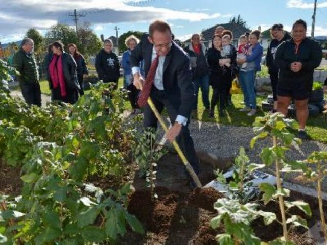 Labour leader Andrew Little plants a feijoa tree in the Corstorphine Community Hub garden. PHOTO: GERARD O'BRIEN