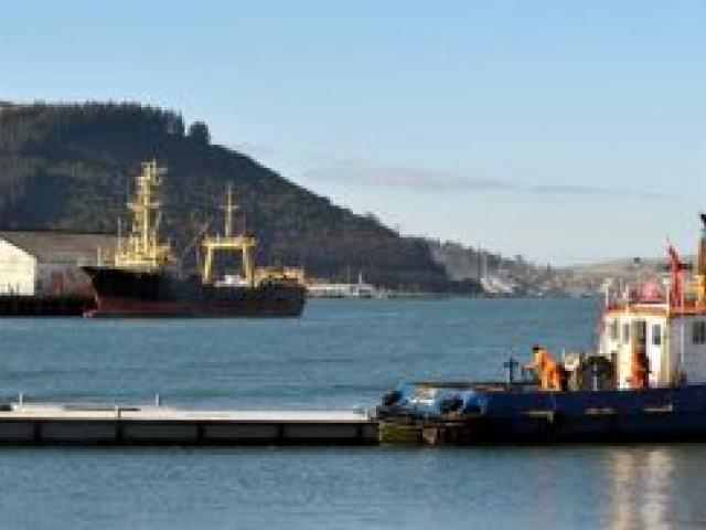 Port Otago workboat Kapu tows the Portobello jetty pontoon to Birch St wharf yesterday. Photo by Gregor Richardson.