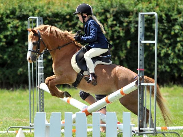 Jessica Greiner of Mosgiel gets her pony Paladin over the 50cm jump at the 2018 Otago Taieri A&P...