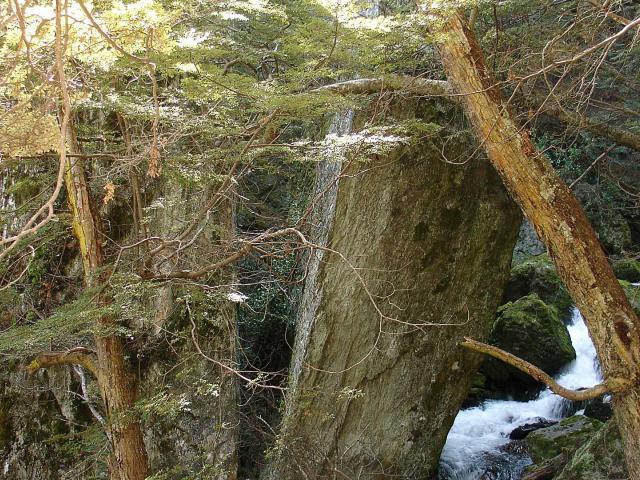 The Wye Creek track. Photo: DOC