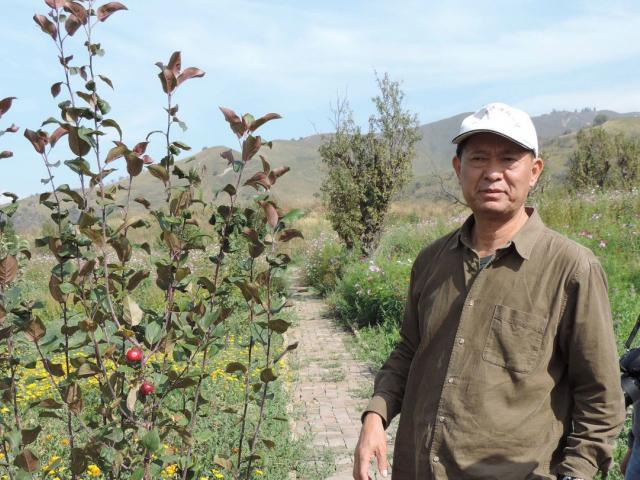 Prof Guan with one of the newly-planted wild apple trees in China's Ili Botanic Garden. Photos: Charmian Smith