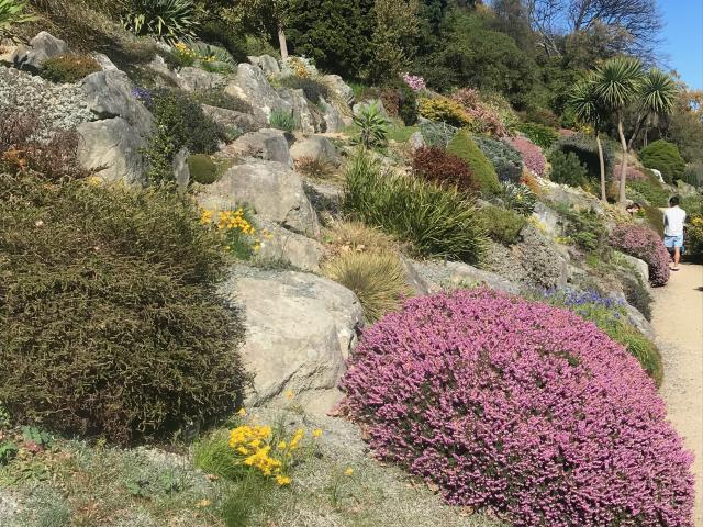 Spring colour in the Dunedin Botanic Garden's rock garden. Photos: Gillian Vine