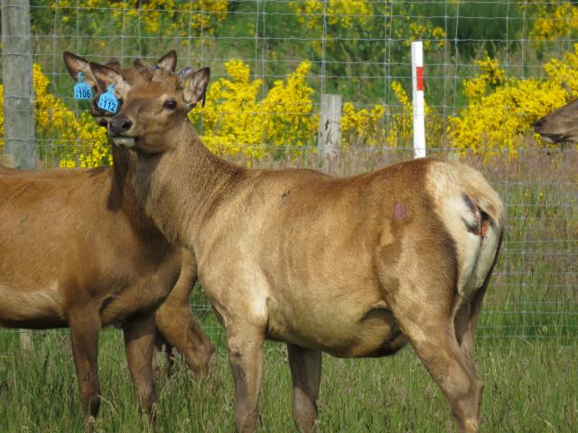 Young sires . . . Three-year-old bulls at Connemara. PHOTO: SUPPLIED