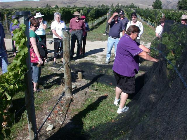 Fruit of the vine . . . Jude Sparks (right foreground) of Waitaki Valley Viticulture Services...