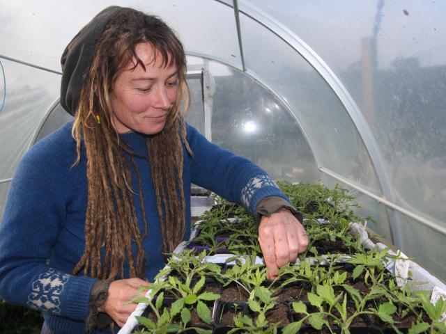 Waitaki Community Gardens volunteer co-ordinator Ra McRostie tends to her plants. Photo by...