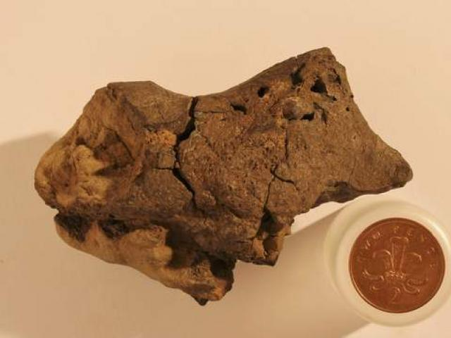 first known example of fossilised brain tissue from a dinosaur, and say it resembles the brains...